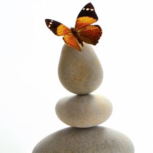 cocon sémantique et effet papillon SEO