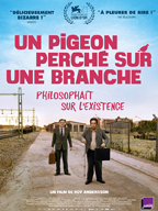 pigeon-1