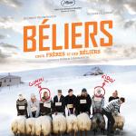 Le film a été présenté à Un Certain Regard au Festival de Cannes 2015. Dans une vallée isolée d'Islande, deux frères qui ne se parlent plus depuis quarante ans vont devoir s'unir pour sauver ce qu'ils ont de plus précieux : leurs béliers.
