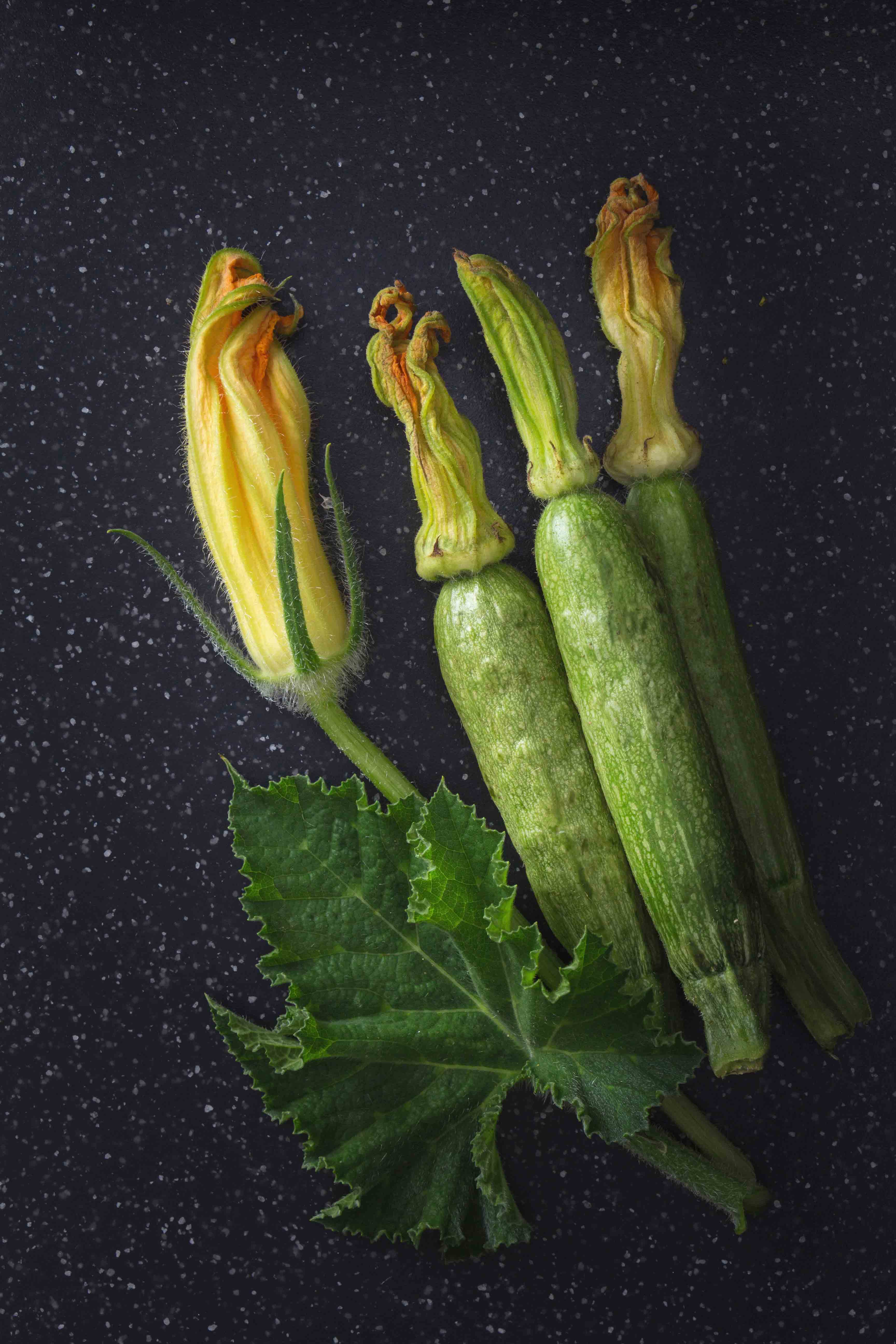 Courgette-Edith